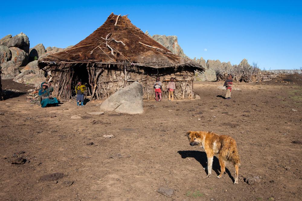 dog-ethiopia-Will-burrard-lucas