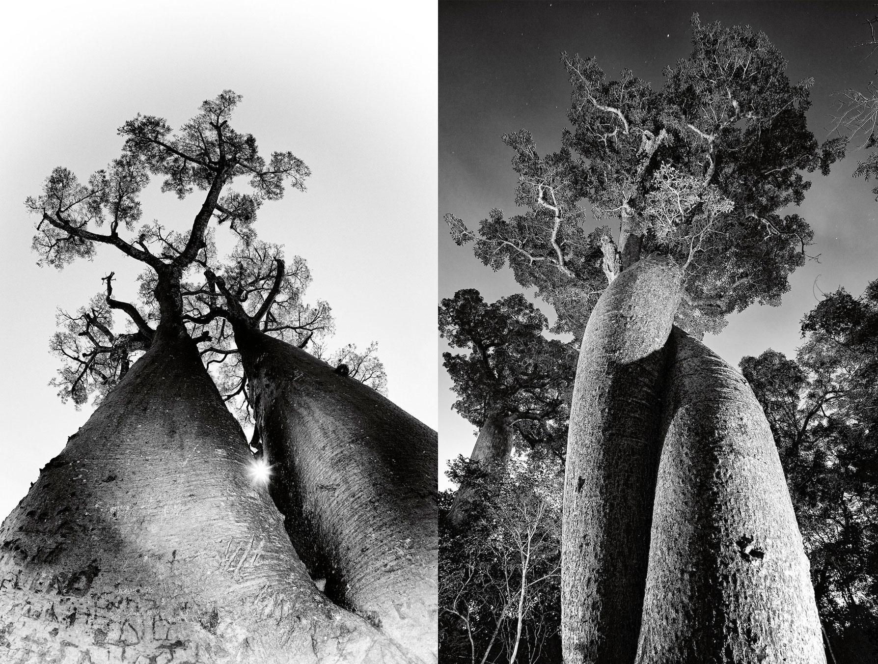madagascar-baobabs-heinrich-van-den-berg-3