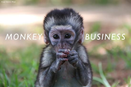 monkey-header-2