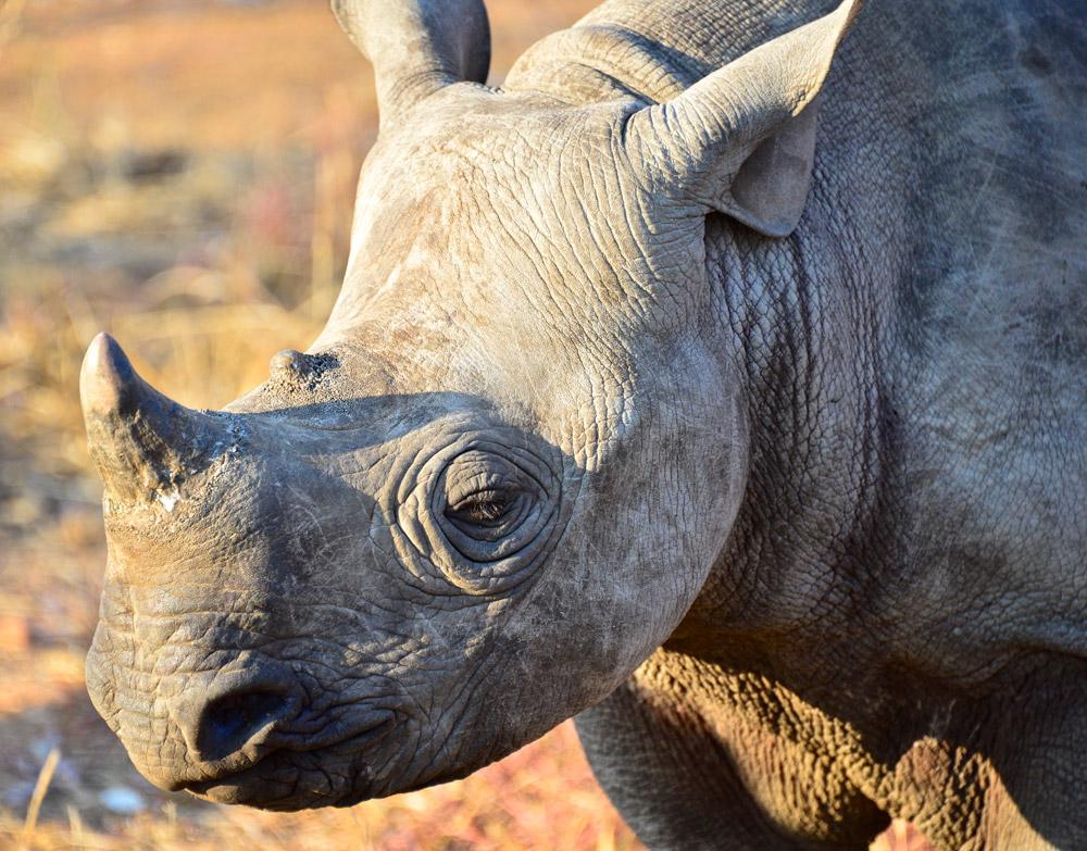 rhino-baby-Dex-Kotze