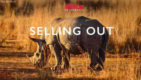 rhino-horn-trade-header-22