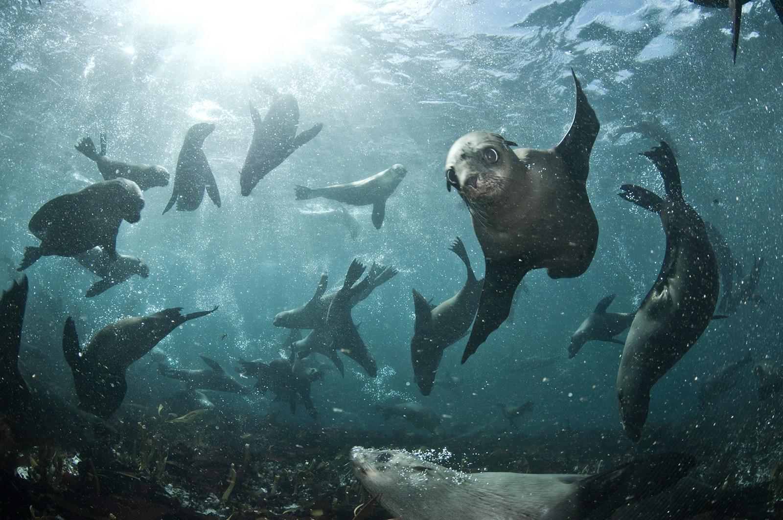 Atlantic-Circus-seal-snorkeling