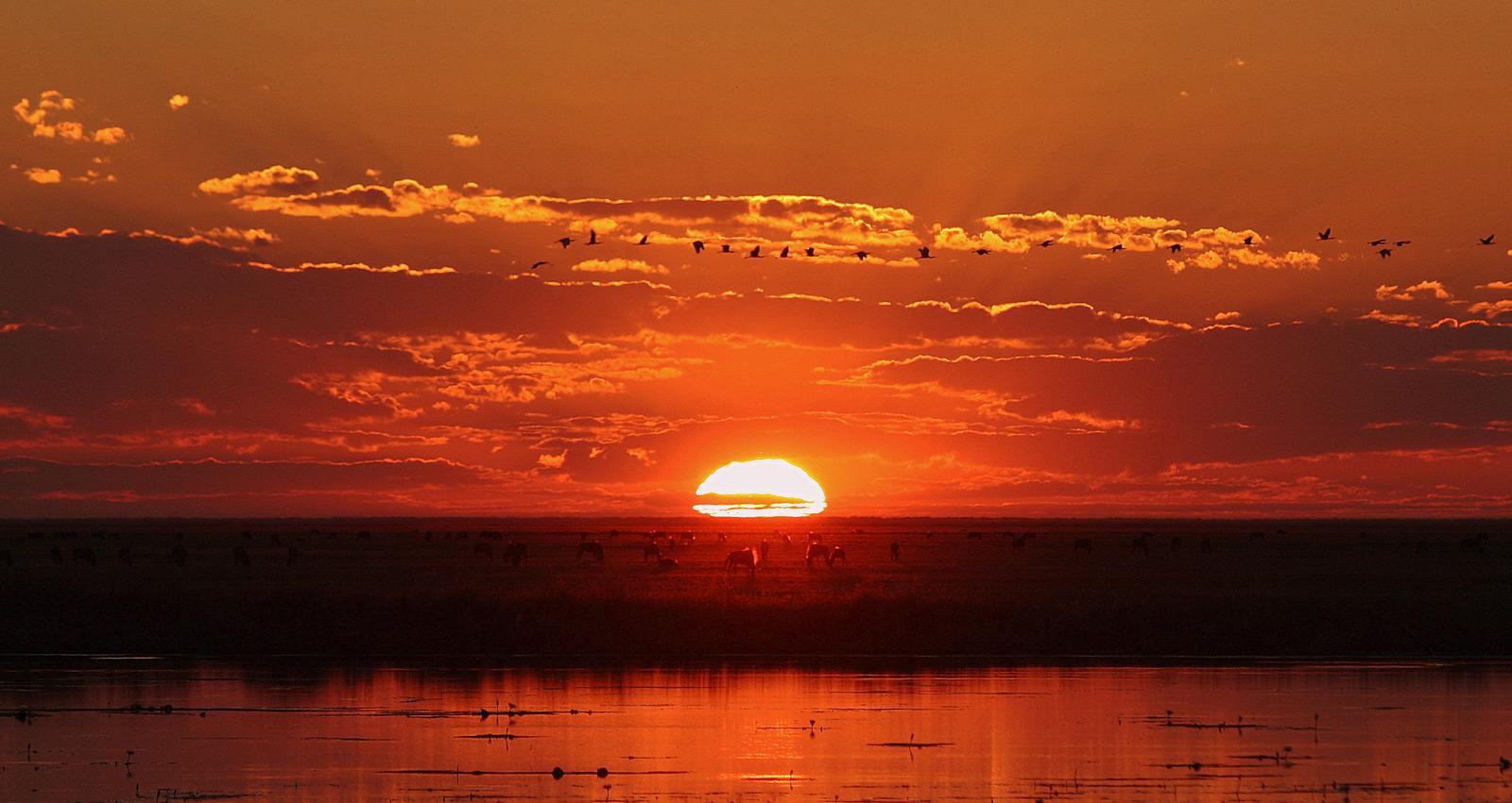 Liuwa-Plains-NP-Zambia-(AP)-APN_005021-Michelle-Attala