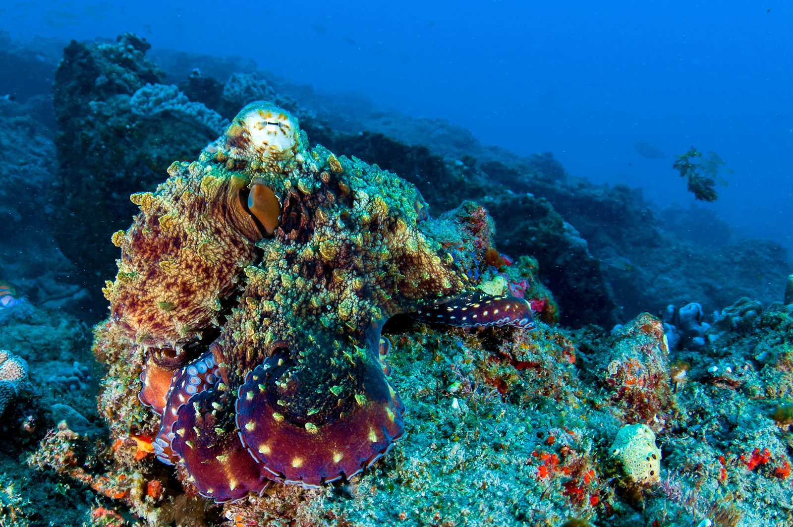 importance of coral reefs pdf