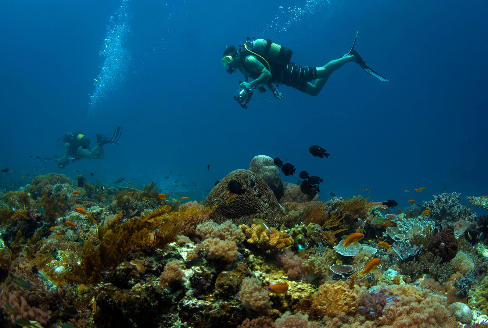 coral-reef-diving-east-africa-IMG_0258-22