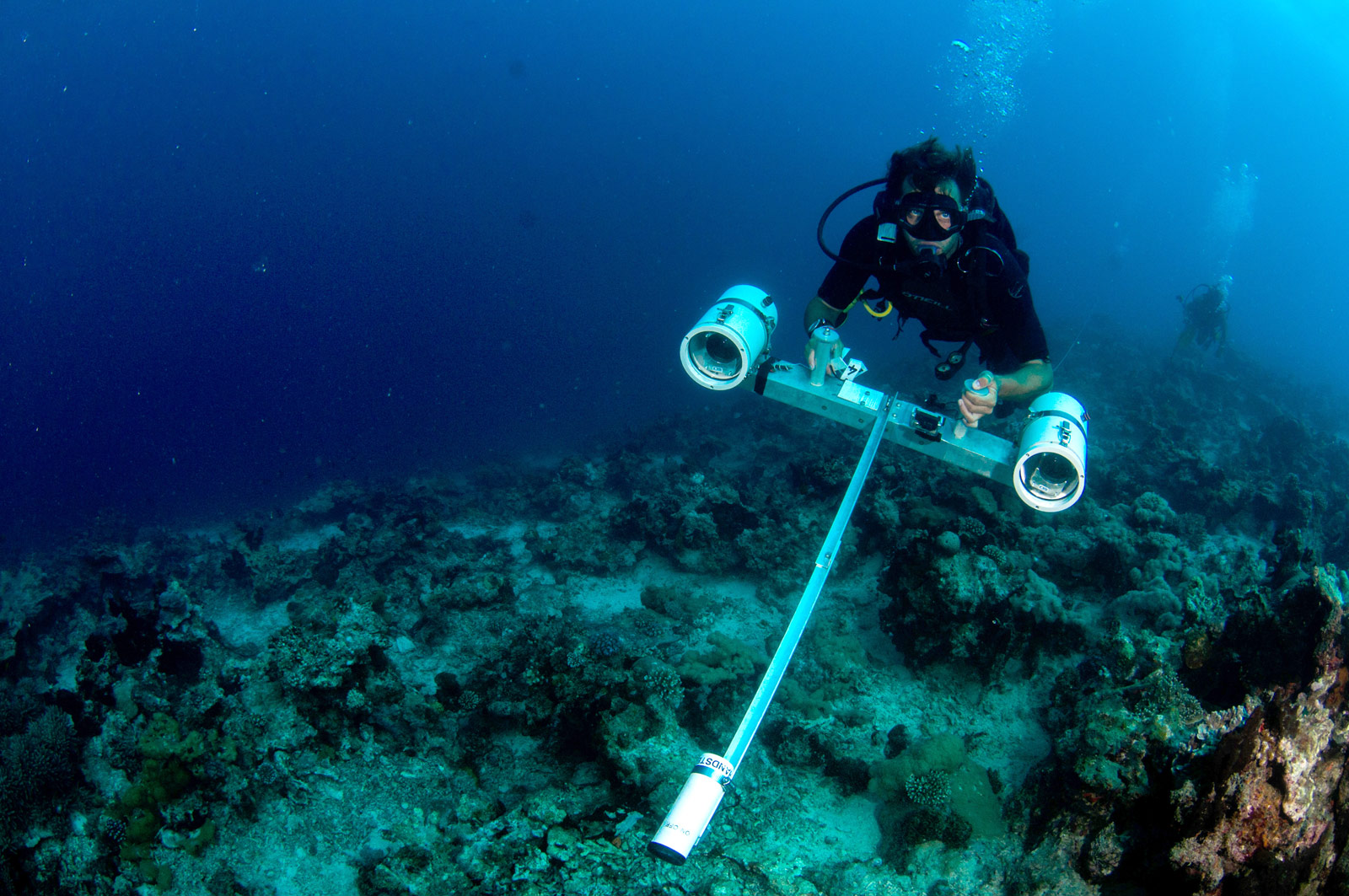 east-african-coral-reef-diving-Copyright-Caine-Delacy-2012-2038