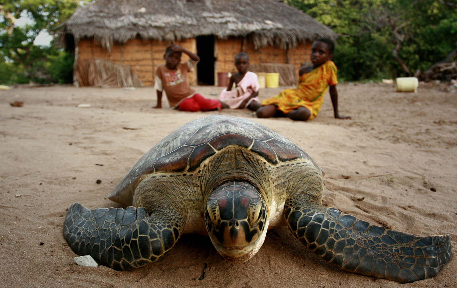 turtle-east-african-coral-reefs-diving