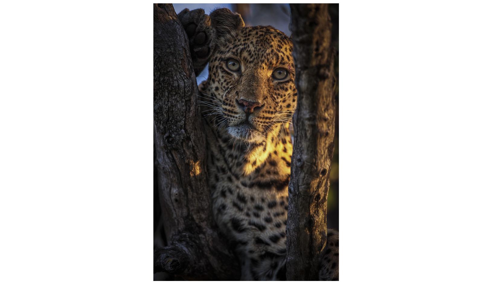safari magazine gujarati pdf free download 2015