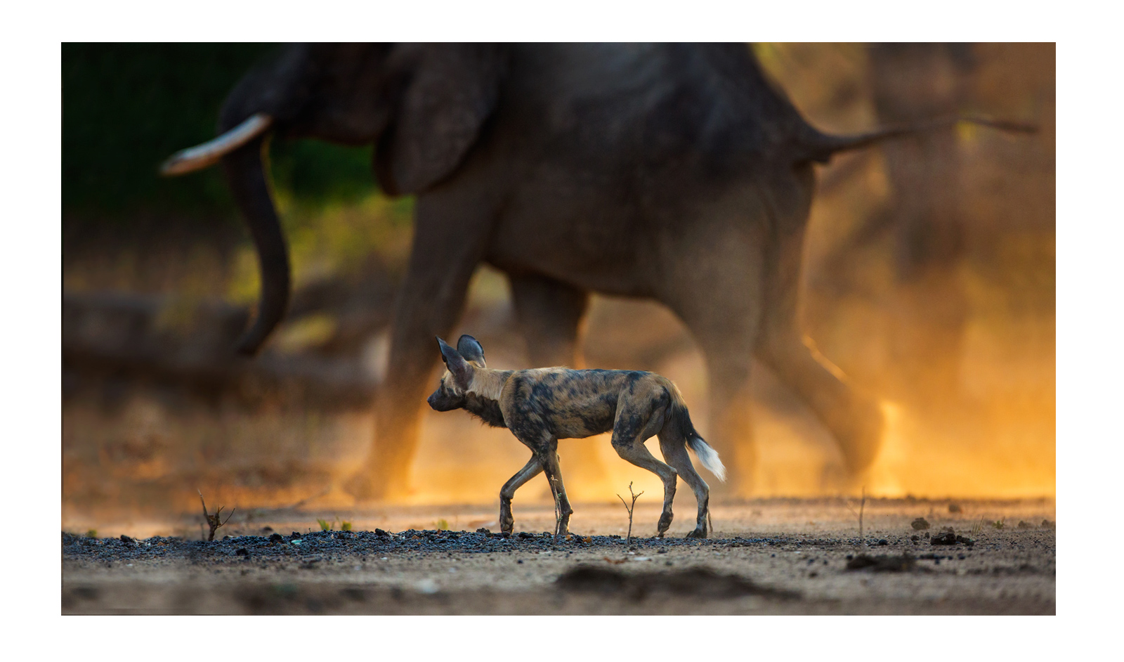 Mana-Pools-National-Park,-Zimbabwe-Alistair-Swartz