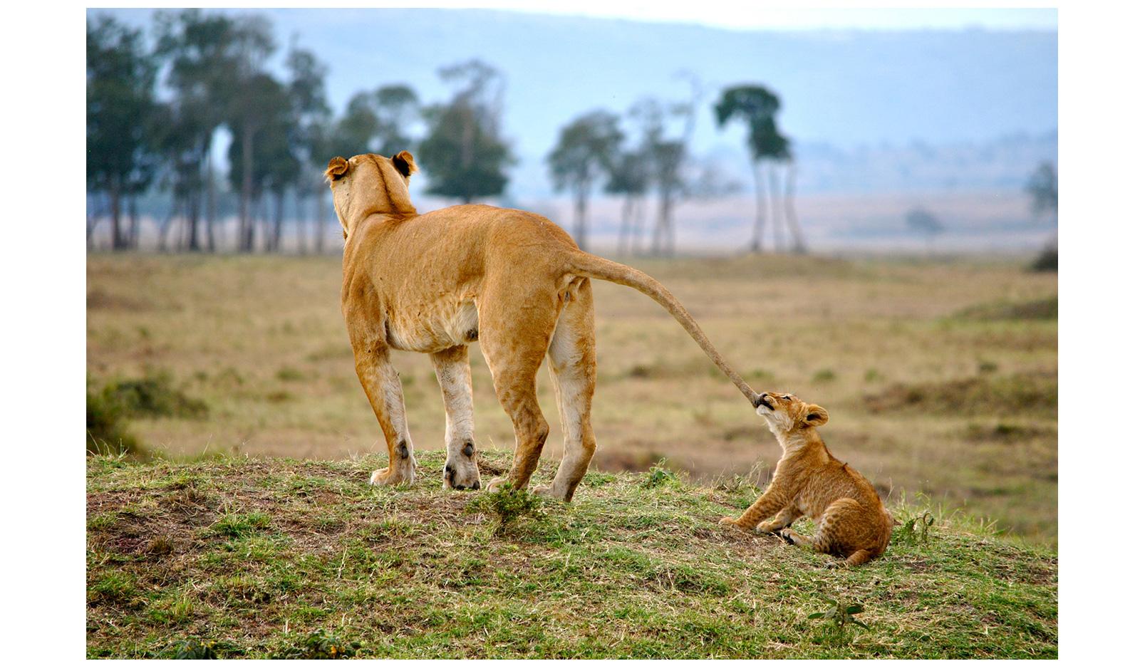 _Maasai-Mara,-Kenya-Tori-marsh