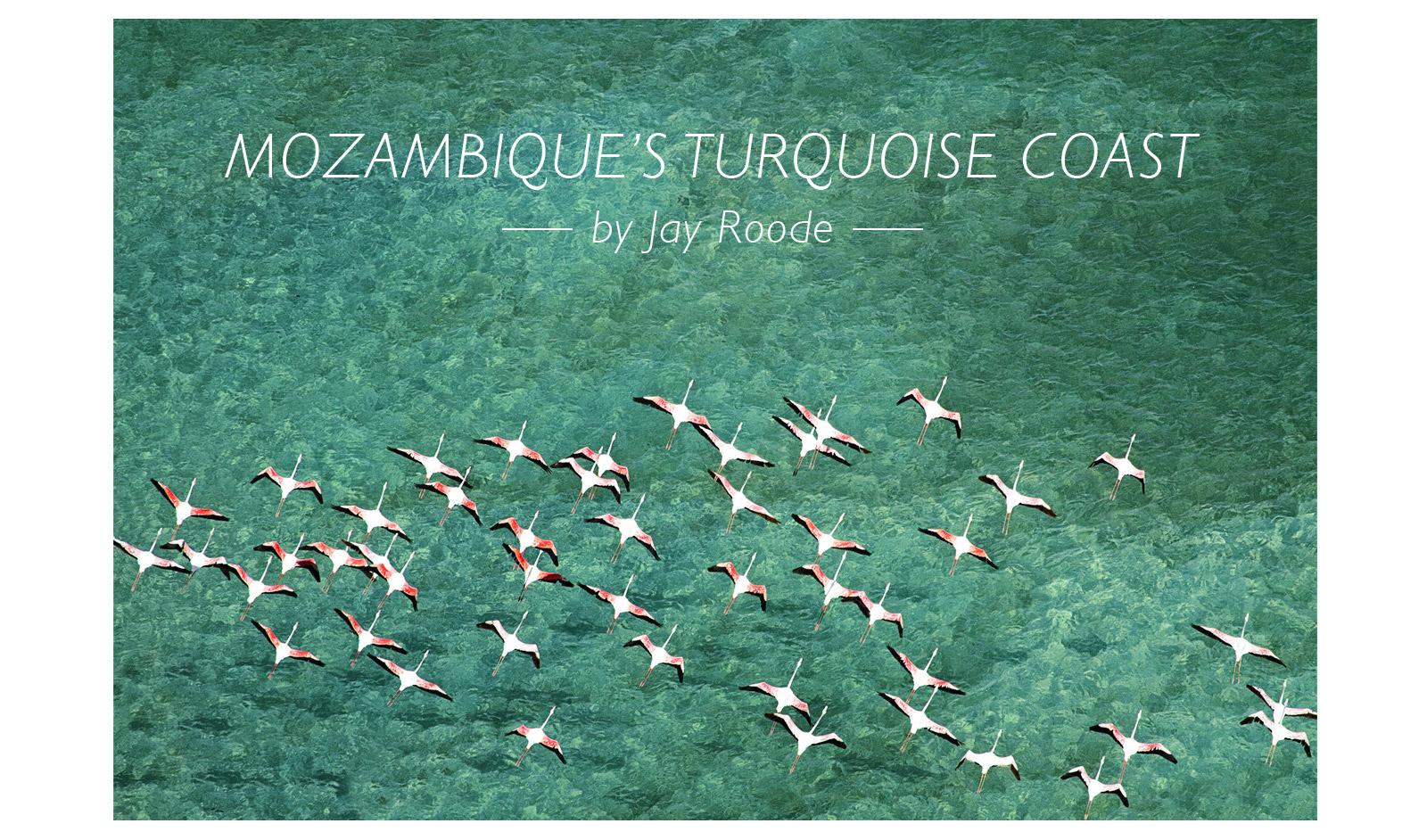 Mozambique-flamingos-sao-sebastio-lagoon-cover