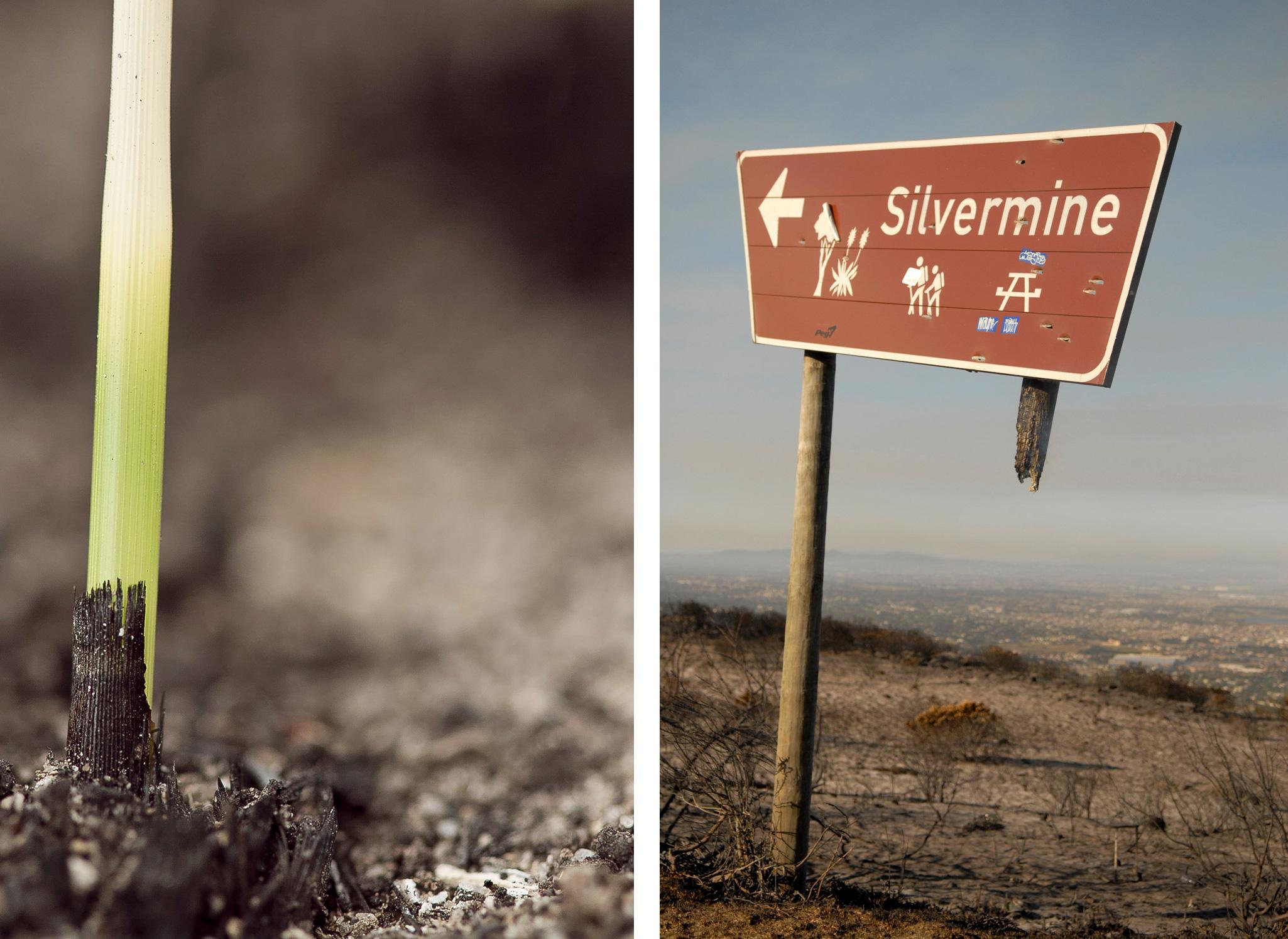 capefire-silvermine-regrowth-christian-boix-Anton-Crone-2