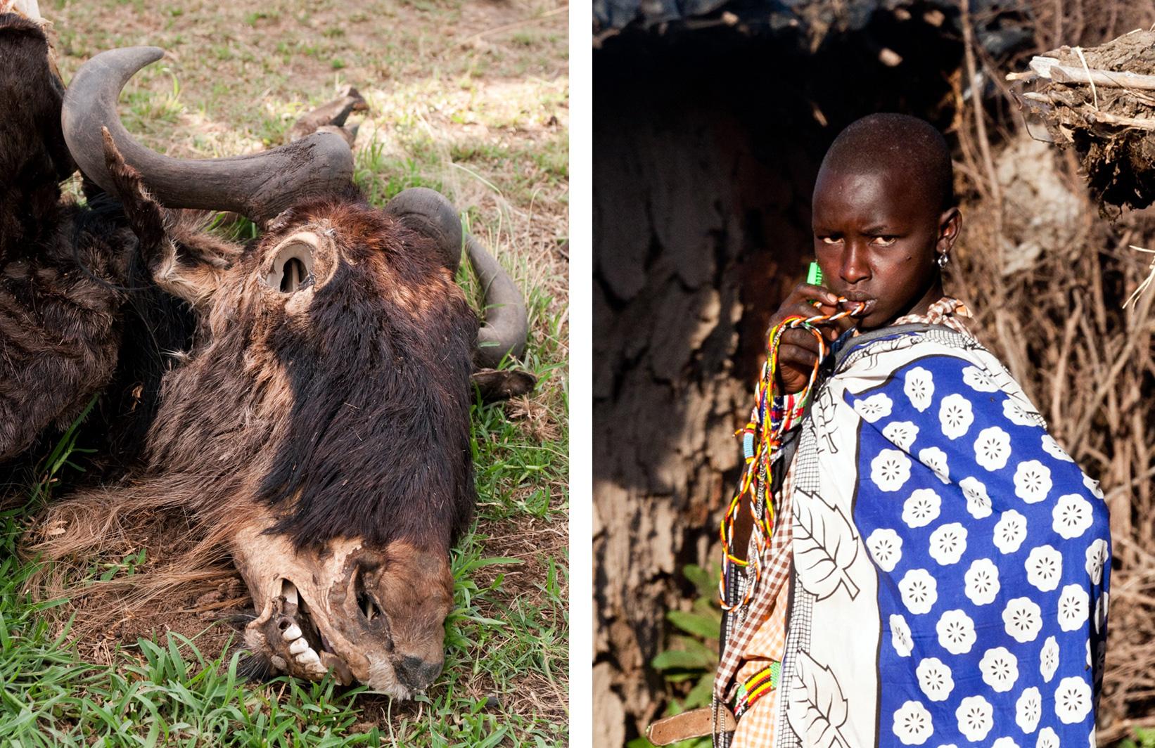 wildebeest-skull-(wiki)-maasai-girl-Julia