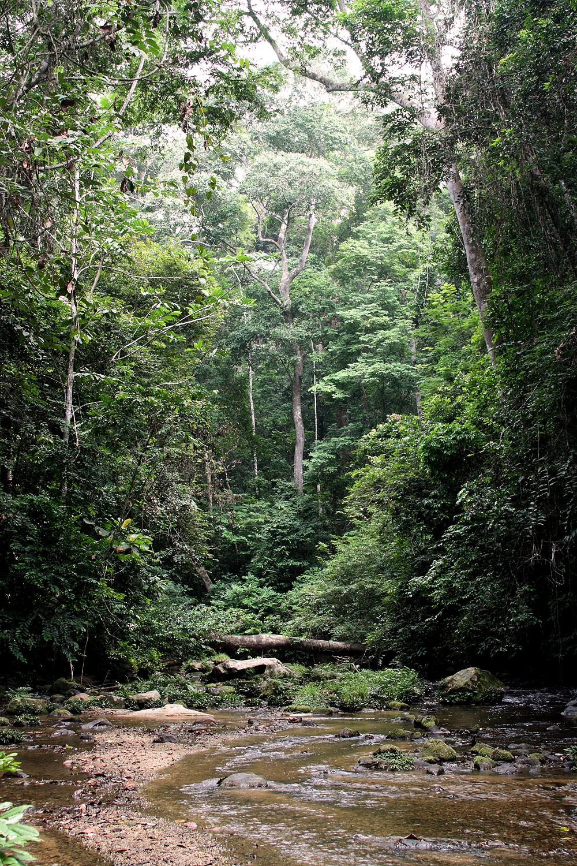 Gabon-forest3