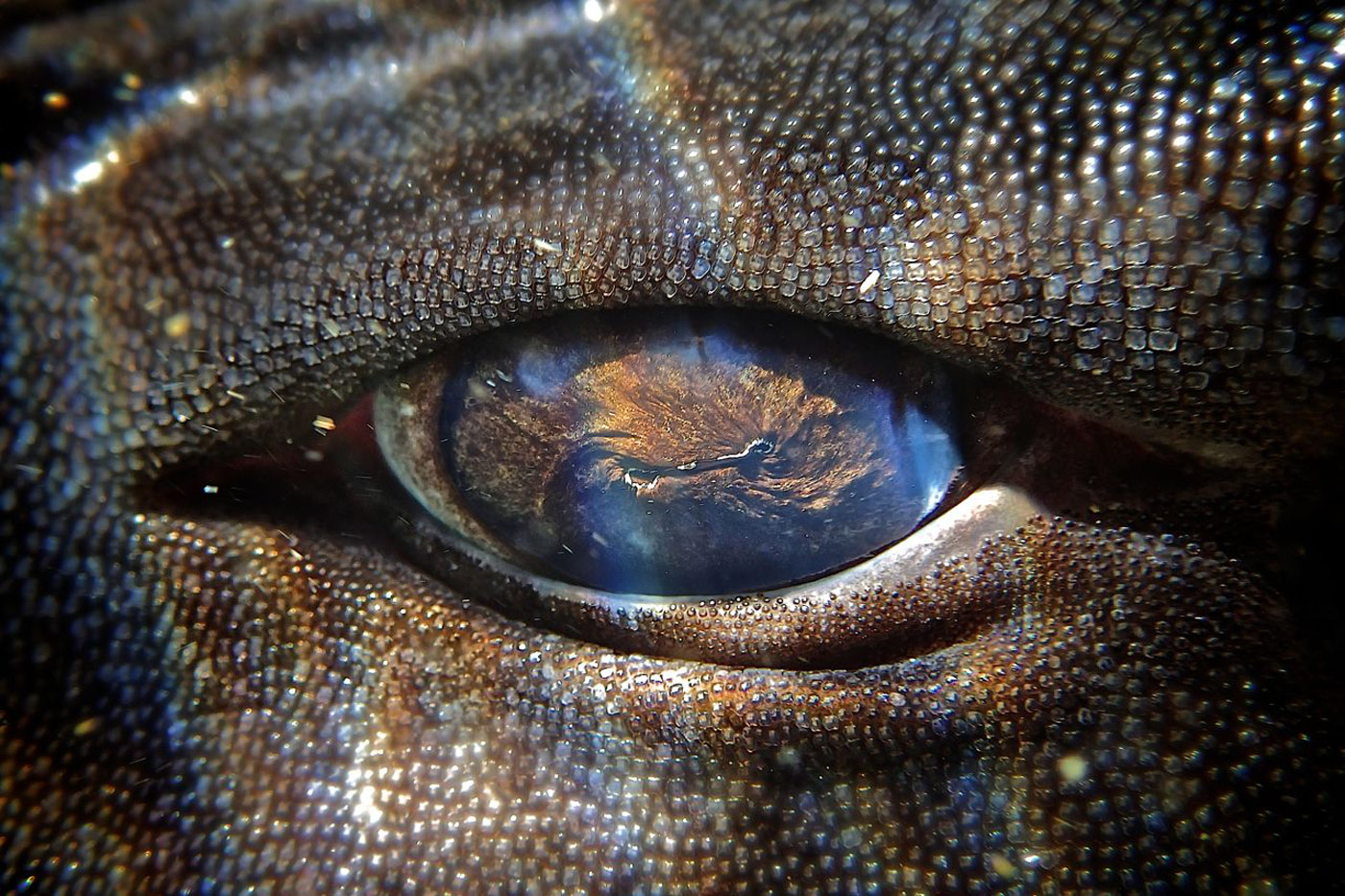 catshark-eye