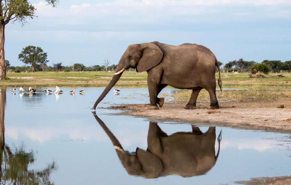 elephant-in-hwange