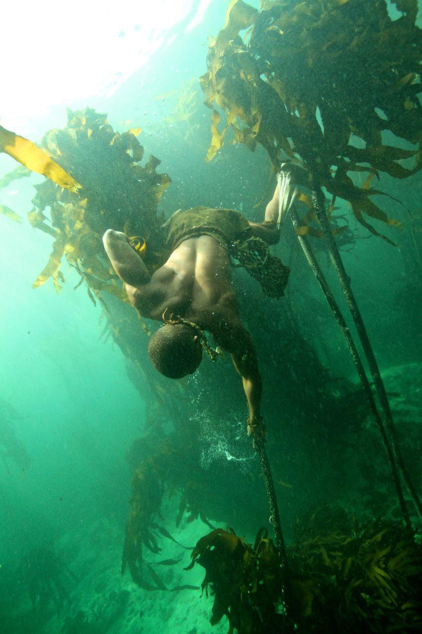 pulling-down-on-kelp