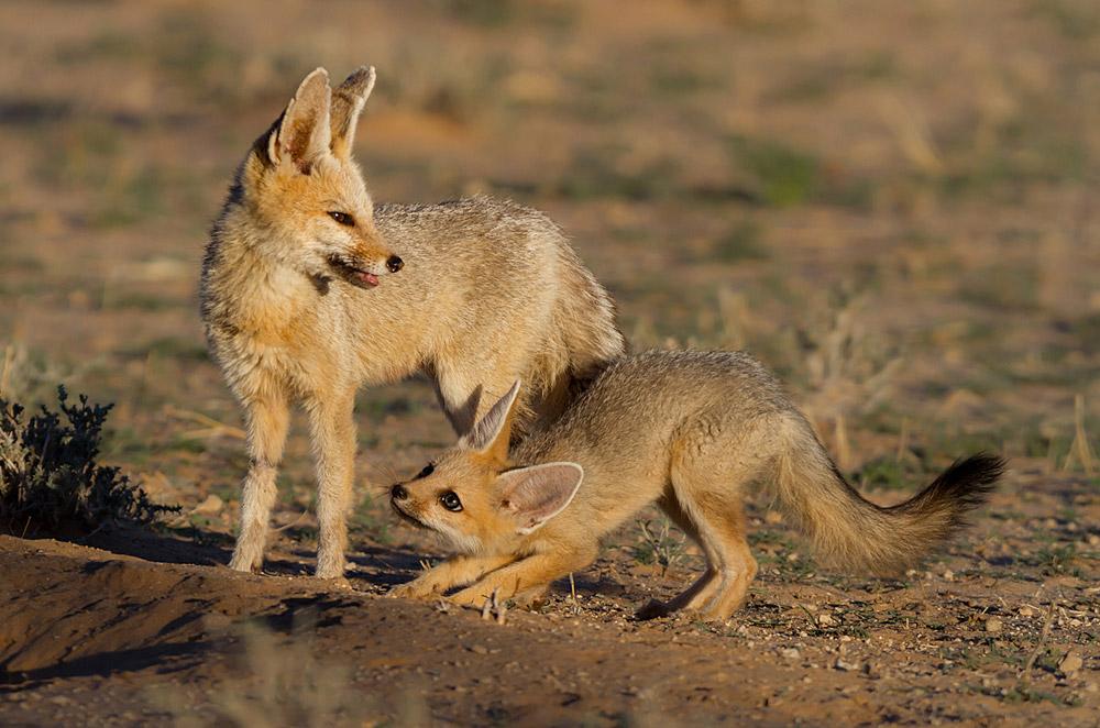 Kalahari-near-Rooiputs-John-de-Jager