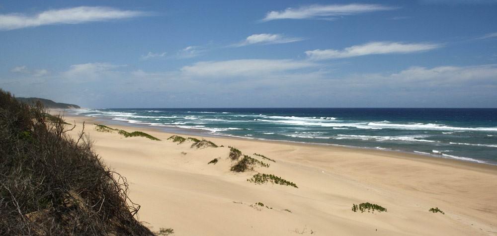 Maputaland-coast-south-of-Mabibi-17-January-2014-GRH-Collection-1abe-(2)