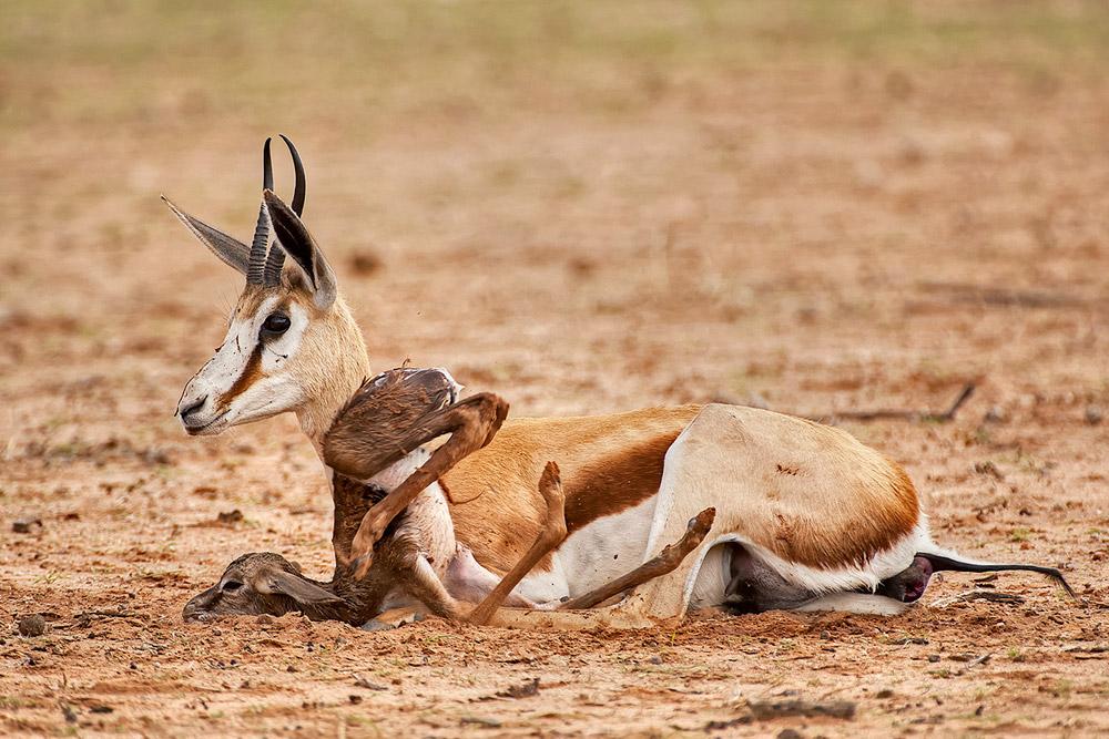 ShaneSaunders-Kgalagadi-Transfrontier-Park