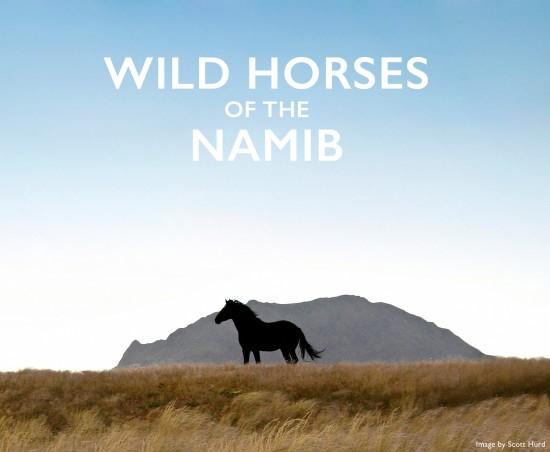 Wild-horses-namib-header
