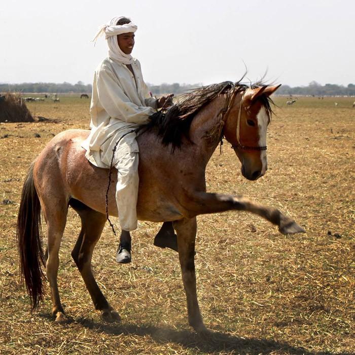 Zanne Labuschagne nomad-stallion-zakouma-ranger-patrols