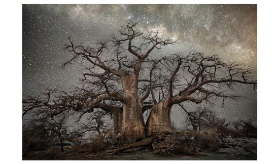 Baobab-6