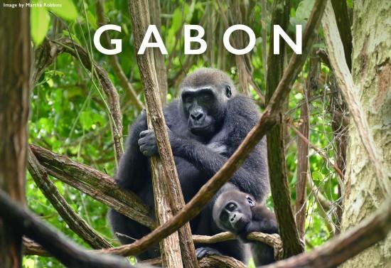 Gabon-header-marthan-robbins-chimp
