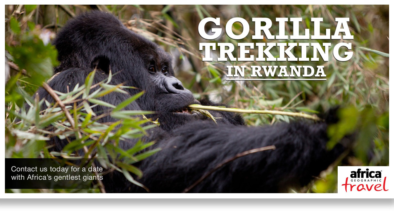 Instory-gorilla-rwanda-ad
