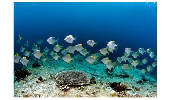 School-of-fish---Imran-Ahmad,-www.Escapeinc.com.sg