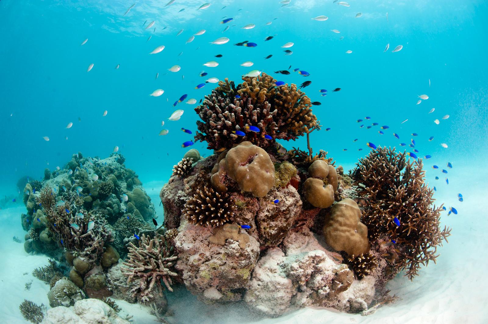 Seychelles-underwater