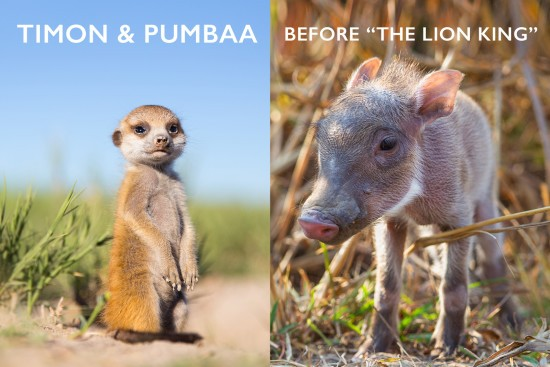 Timon-and-Pumbaa-cover
