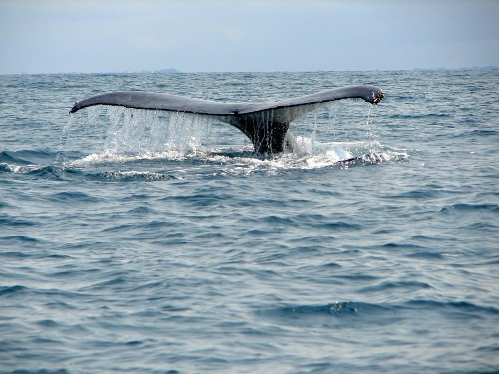 Whale-tail-martha-robbins