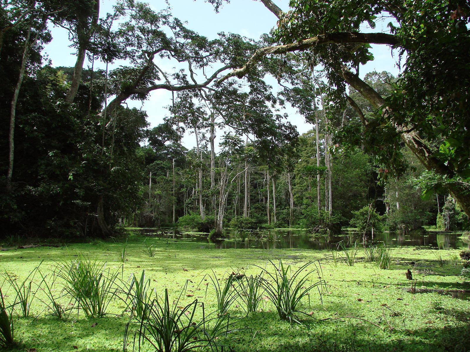 gabon-forest-loango-martha-robbins