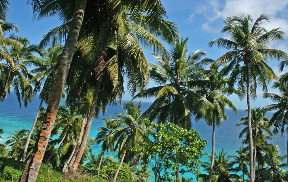 seychelles-palm-trees