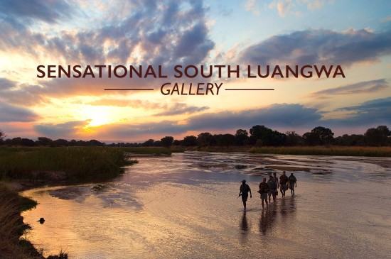 SOUTH-LUANGWA-GALLERY