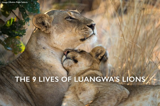9 lives of south luangwa