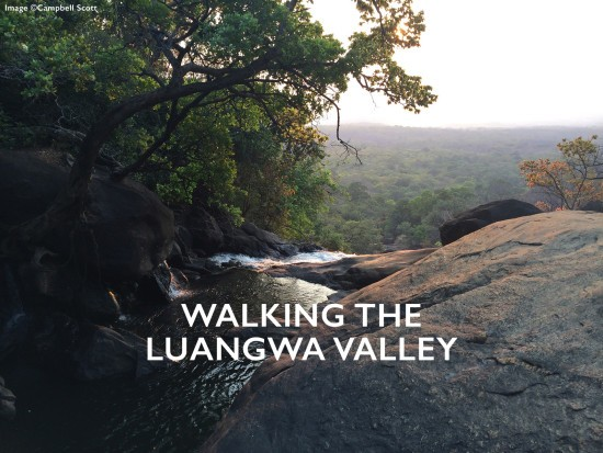Walking-the-luangwa-header