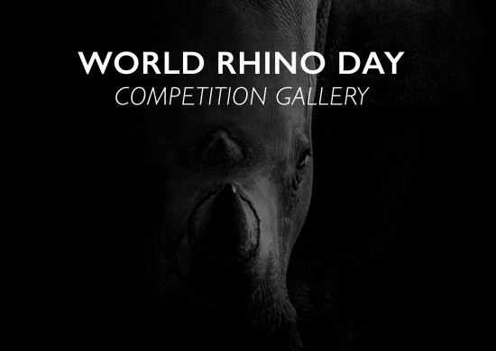World-rhino-day-header