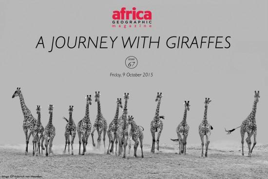Giraffe-cover