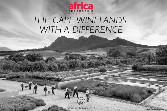 The-Cape-Winelands-with-a-difference