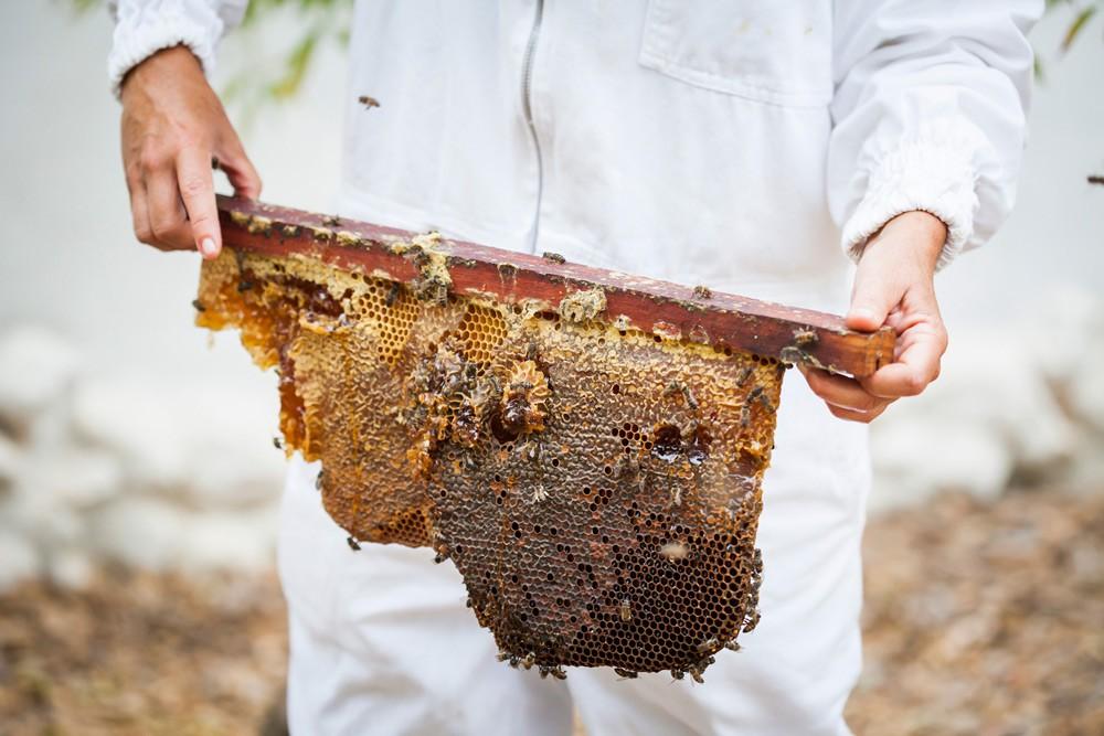 honeycomb-at-bablyonstoren