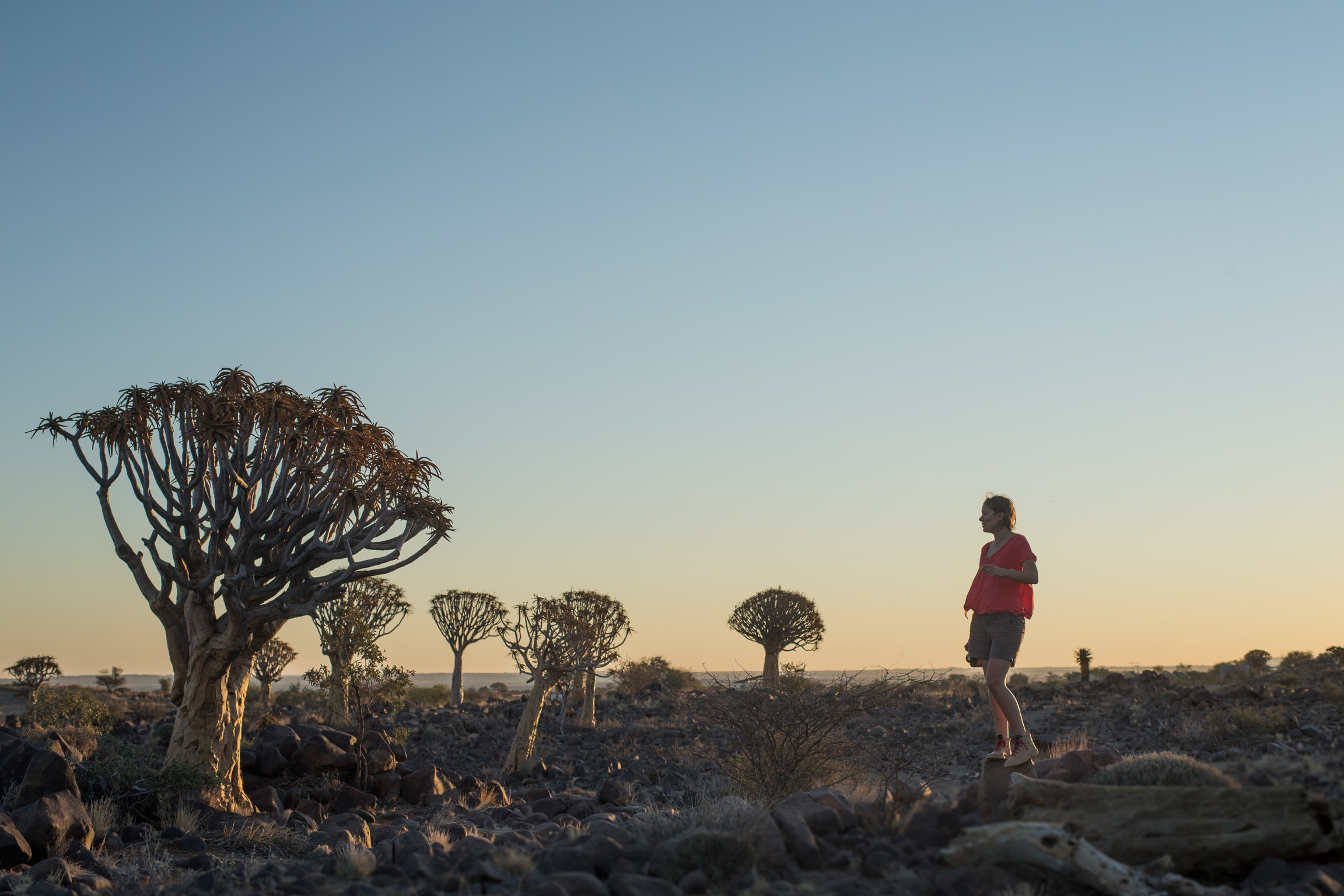 The awe-inspiring quiver tree forest just outside of Keetmanshoop
