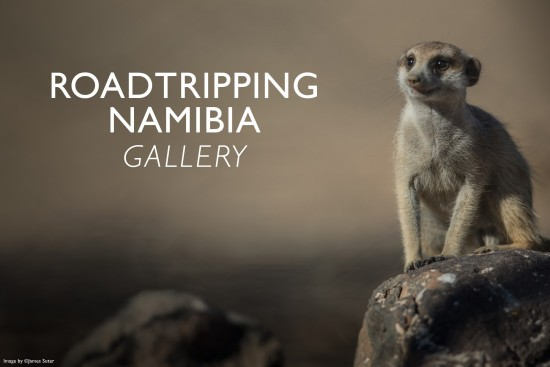 roadtripping-namibia-gallery