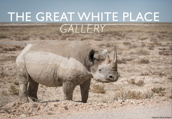 the-great-white-place-gallery