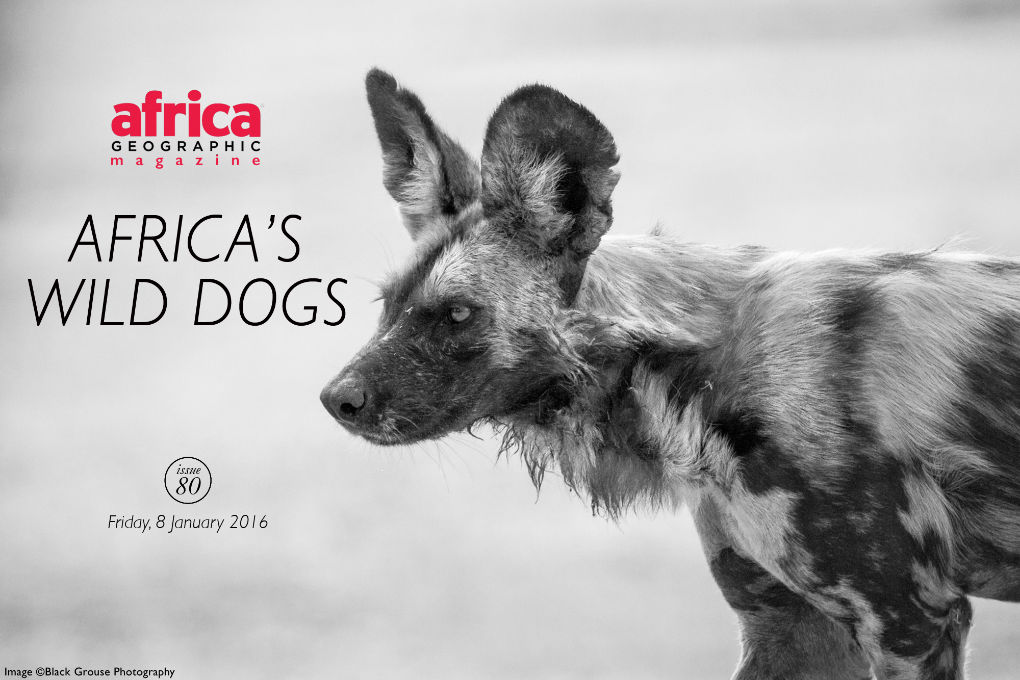 africas-wild-dogs-issue-80