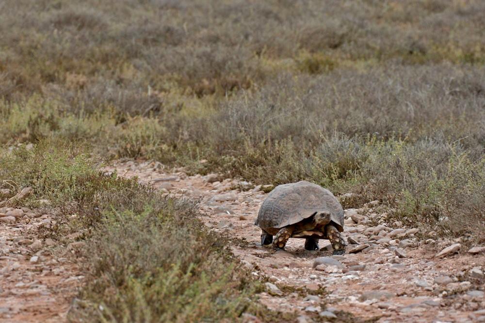 addo-tortoise-janine-avery