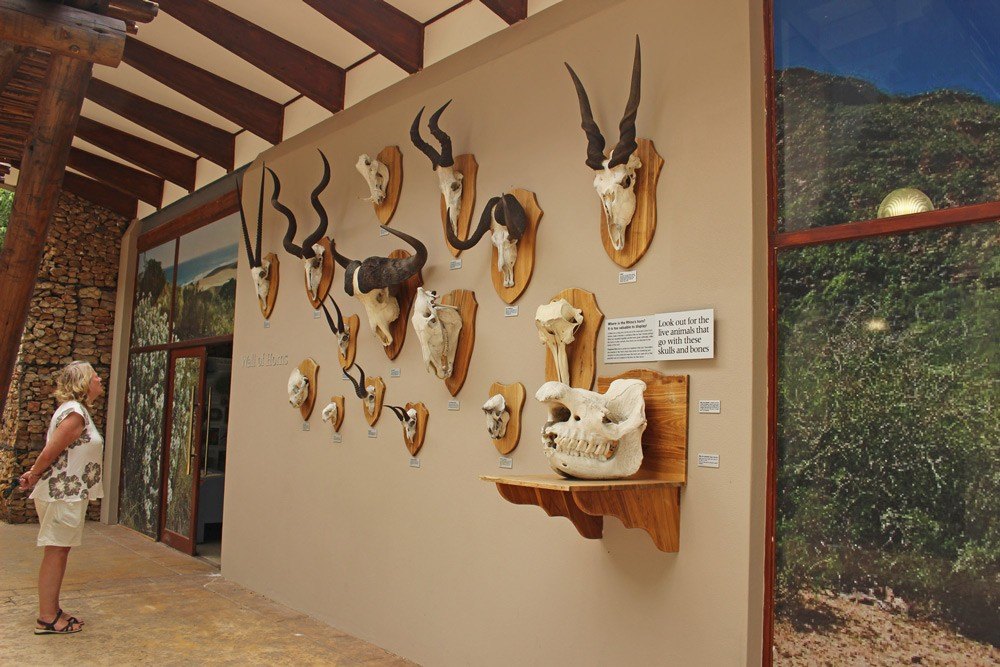 addo-visitors-centre-janine-avery
