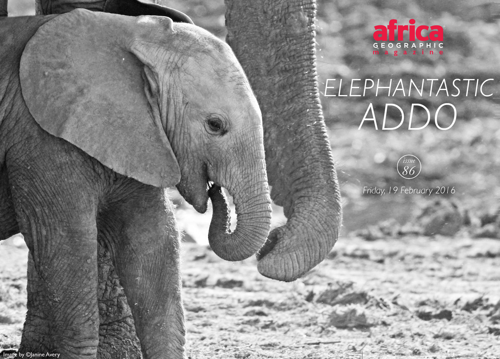 elephantastic-addo-elephant-park-issue-86