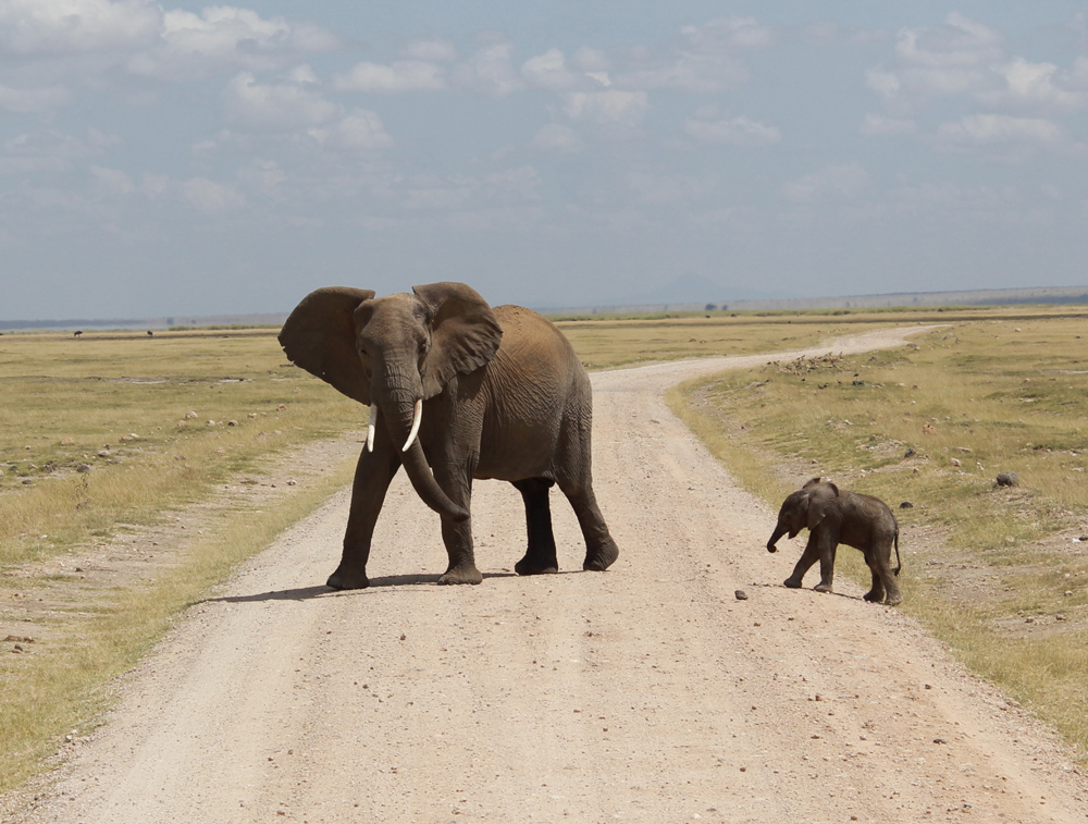 baby-elephant-and-mum-cross-road